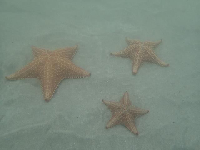 Playa Estrella